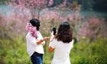 Nhóm 'phượt thủ' bẻ Mai Anh Đào gây bão trên facebook