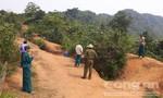 Cô giáo đi chăn bò nghi bị hiếp, giết chết, ném xác trong rừng