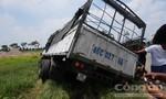 Xe tải rơi mương nước do tài xế bị ong vò vẽ đốt