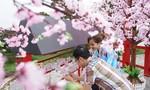 Sun World Halong Complex tái hiện sống động không gian văn hóa Nhật Bản