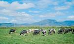 Hành trình ra mắt sữa tươi 100% organic tiêu chuẩn Châu Âu đầu tiên tại Việt Nam – Chuyện chưa kể