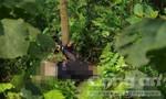 Thi thể người phụ nữ chết bị trói tay vào gốc cây nhiều thương tích