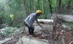 Lại phát hiện gỗ vi phạm tại rừng biên giới Kon Tum
