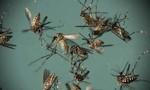 Brazil bãi bỏ tình trạng khẩn cấp đối với dịch Zika