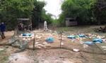 Nguy cơ bùng phát dịch cúm H5N1 tại huyện Ea Súp do đàn vịt chạy đồng