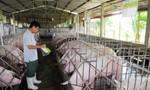 Kêu gọi công đoàn viên, nhà giáo chia sẻ khó khăn với người chăn nuôi