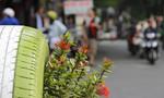 Thích thú khi thùng rác cũng 'nở hoa' khoe sắc giữa trung tâm Sài Gòn
