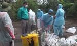 Đắk Lắk đã xuất hiện ổ cúm vi rút H5N6 trên đàn vịt trời nuôi