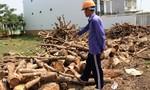 Xưởng cưa, bãi củi gây ô nhiễm môi trường