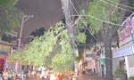 Cây xanh gãy, tét nhánh hàng loạt trong cơn mưa lớn ở Sài Gòn