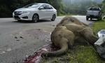 Voi con chết thảm do bị tông trên cao tốc Malaysia