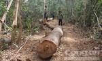 Tặng gỗ thu được của lâm tặc cho người nghèo