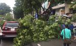 Nhánh cây xà cừ gãy đè ô tô ở trung tâm Sài Gòn