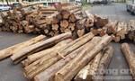 Bắt xe tải vận chuyển hơn 15m3 gỗ lậu