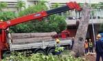 Dùng cây xanh bị đốn hạ làm bàn ghế, tượng nghệ thuật phục vụ nơi công cộng