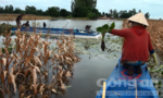 Liên tiếp xảy ra hai vụ sạt lở đất bờ sông