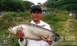 Một người dân câu được cá thác lác nặng 7kg