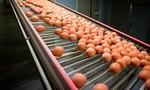 20 tấn trứng bị nhiễm thuốc trừ sâu fipronil được bán ở Đan Mạch