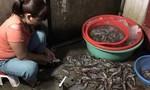 Mật phục bắt quả tang hai cơ sở bơm tạp chất cho tôm