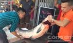 Cá trắm khủng gần 50kg được đưa từ Yên Bái về Hà Nội