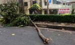Đang ăn sáng, nữ công nhân bị nhánh cây rơi đè gãy xương