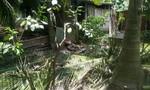 Thợ đốn cây chết bất thường cạnh hàng rào