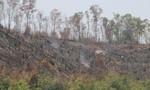 Liên tục để mất đất rừng, 2 lãnh đạo ban quản lí rừng bị kỷ luật