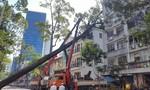 Mưa lớn khiến cây xanh bật gốc ngã vào nhà dân