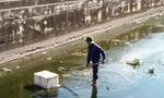Cá chết trắng ở hồ điều hòa Nguyễn Du