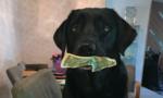 Hài hước chuyện chó 'mê' tiền