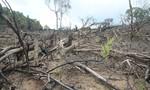 Kiểm tra, phản ánh việc phá rừng phòng hộ xã Ba Liên