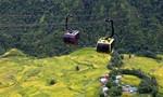 Đi ngay kẻo lỡ: Mùa lúa chín vàng trên thung lũng Mường Hoa