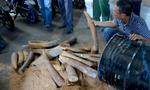 Ngà voi nguỵ trang trong thùng nhựa đường quá cảnh cảng Cát Lái