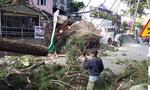 Đà Lạt: Cây thông cổ thụ đổ vào nhà hàng, 1 người đi cấp cứu