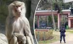 Sở thú tại Pháp sơ tán du khách vì 50 con khỉ sổng chuồng