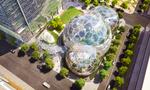 Amazon mở cửa văn phòng rừng nhiệt đới tại Seattle