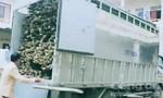 Một phụ nữ lái xe tải chở theo lượng lớn gỗ lậu