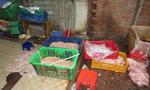 Chủ cơ sở ở Sài Gòn dùng hóa chất tẩy trắng lòng heo trước khi tung ra thị trường