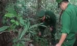 Bắt kẻ vận chuyển 17 con rùa và cầy hương khu vực biên giới