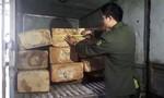 Mật phục bắt ô tô vận chuyển gỗ Pơ Mu lậu lúc rạng sáng