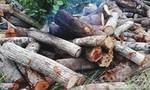 Kiểm lâm bị tạt xăng đốt khi đang kiểm đếm gỗ trái phép