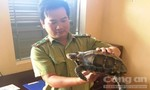 Người dân giao nộp cá thể rùa núi cực quý