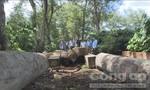 """""""Đột kích"""" xưởng gỗ cực lớn, phát hiện 170m3 gỗ không rõ nguồn gốc"""