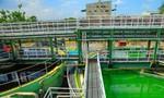 Ajinomoto Việt Nam: Bảo vệ môi trường để phát triển bền vững