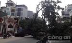 Cây đổ chắn ngang đường, nhiều người thoát nạn