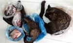 Cán bộ xã bị phạt vì rao bán động vật hoang dã trên mạng