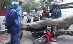 Cây phượng bật gốc ngã xuống đường khiến 1 người bị thương