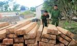 Mật phục cả đêm bắt nhóm lâm tặc khai thác gỗ trái phép