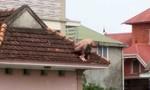 Kẻ ngáo đá ném con 2 tuổi từ mái nhà xuống đất bị khởi tố tội giết người
