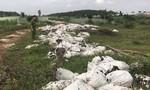 """Đồng Nai: Trại nuôi heo nái """"khủng"""" gây ô nhiễm môi trường"""
